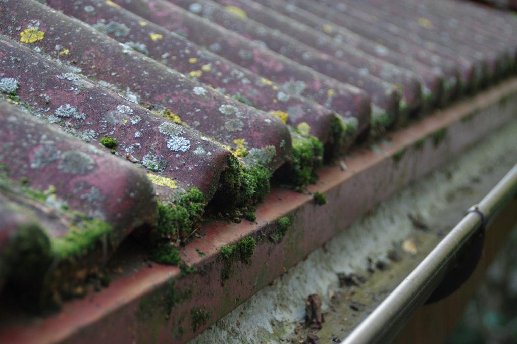 tile roof with algae and moss