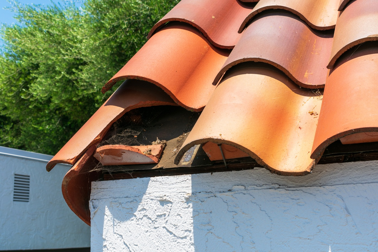 Protect your commercial roof against natural predators.